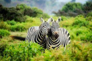 Kawana Safaris